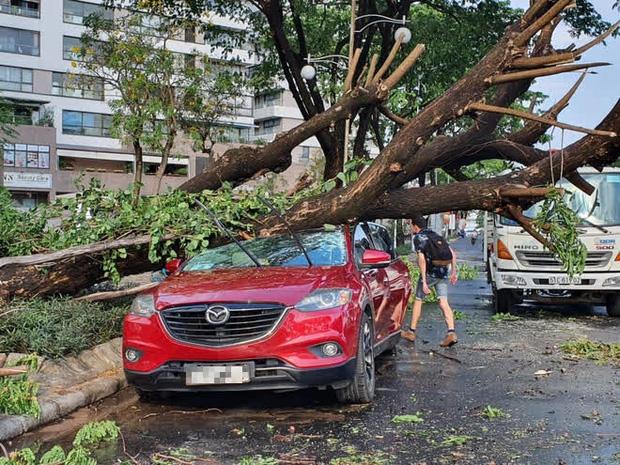 Clip: Khoảnh khắc cây cổ thụ bật gốc đè trúng ô tô đang di chuyển trên đường phố Sài Gòn khiến nhiều người thót tim - Ảnh 6.