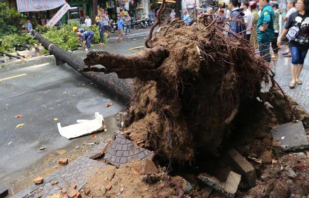 Clip: Khoảnh khắc cây cổ thụ bật gốc đè trúng ô tô đang di chuyển trên đường phố Sài Gòn khiến nhiều người thót tim - Ảnh 4.