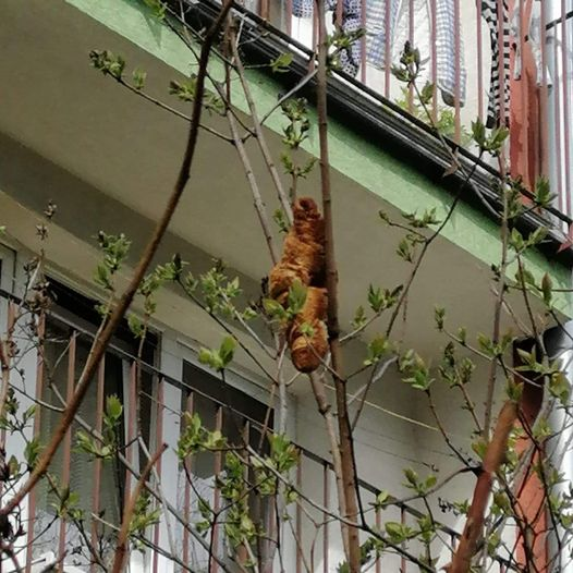 Quái vật đu trên cây khiến người dân sợ hãi không dám mở cửa mấy ngày liền, sự thật đằng sau khiến ai cũng té xỉu - ảnh 1