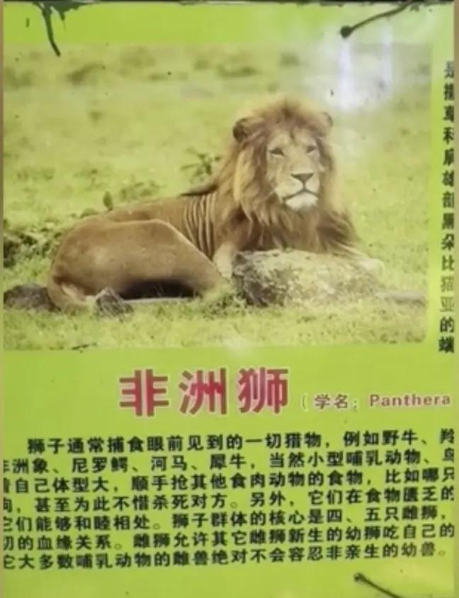 Sở thú lùa chó vàng vào chuồng rồi quảng cáo đấy là sư tử Châu Phi để thu tiền khách - Ảnh 3.