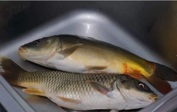 Ăn cá rất tốt cho sức khỏe nhưng có 4 kiểu loại thực phẩm này không nên ăn kẻo gây hại cho sức khỏe - ảnh 2