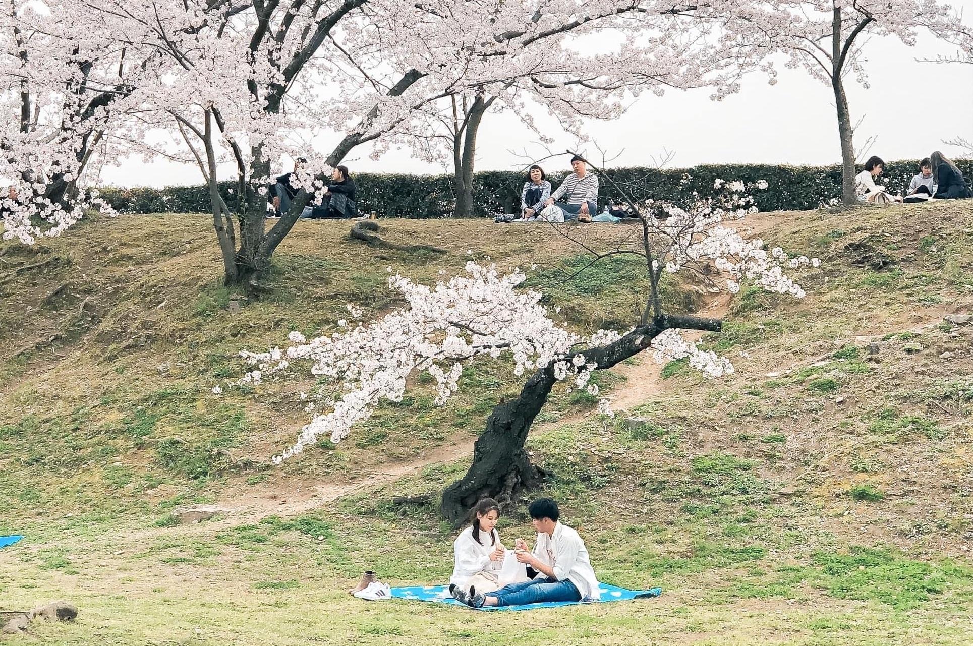 Có một mùa hoa anh đào Nhật Bản đẹp đến tan chảy qua ống kính của du học sinh người Việt: Một khi đã xem thì chẳng thể rời mắt được - Ảnh 11.