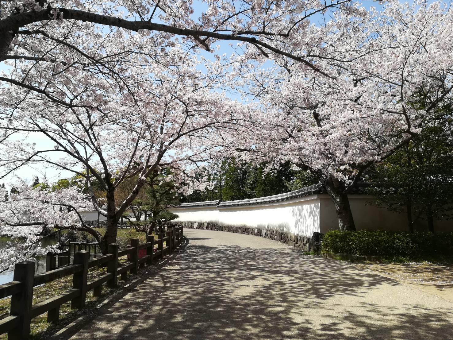 Có một mùa hoa anh đào Nhật Bản đẹp đến tan chảy qua ống kính của du học sinh người Việt: Một khi đã xem thì chẳng thể rời mắt được - Ảnh 5.