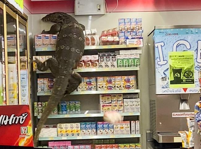 Vào cửa hàng tạp hóa mua đồ, khách la hét hoảng sợ khi chứng kiến cảnh tượng rùng rợn ngỡ quái vật ngoài hành tinh xâm chiếm Trái đất - ảnh 3