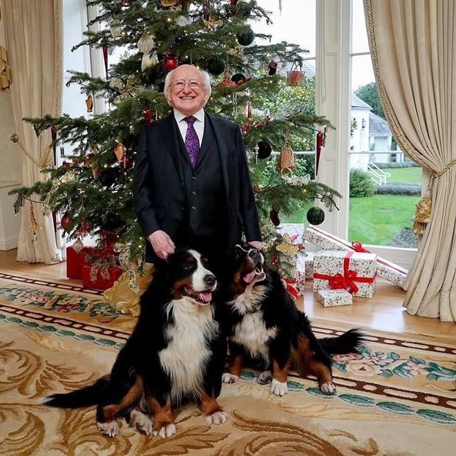 Chó cưng của Tổng thống Ireland càn quét MXH vì màn phá rối chủ đáng yêu hết sức ngay trên sóng trực tiếp - ảnh 4