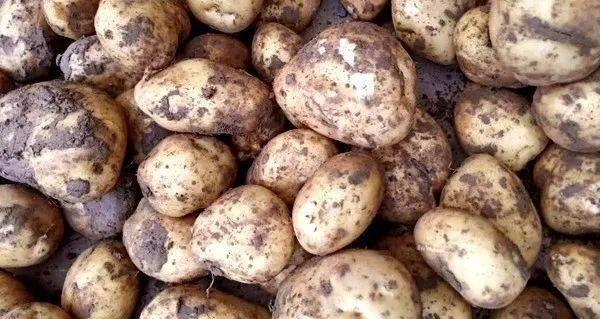 3 loại khoai tây chớ nên mua và 3 lưu ý khi ăn nó, đừng dại mà mắc phải kẻo mang bệnh vào người - ảnh 5