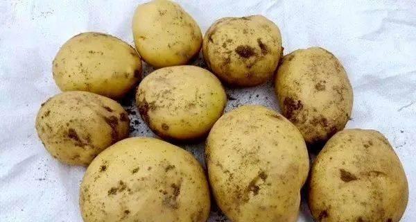 3 loại khoai tây chớ nên mua và 3 lưu ý khi ăn nó, đừng dại mà mắc phải kẻo mang bệnh vào người - ảnh 1