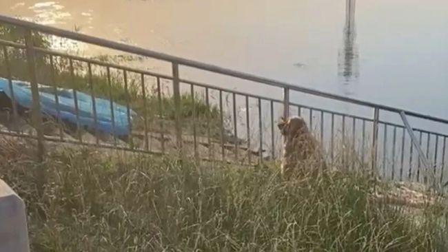 Đi gọi cún cưng mải chơi bên bờ sông, chủ nhân trượt chân chết đuối, hành động sau đó của chú chó trung thành khiến ai nấy nghẹn ngào - ảnh 1