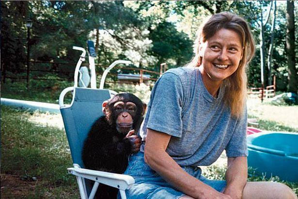 Chuyện về khỉ Travis: Sống như người suốt 14 năm bỗng 1 ngày điên cuồng cắn xé người thân, trước khi chết vẫn cố lê bước về giường của mình - ảnh 1