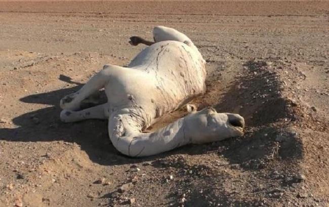 Con vật chết trương phình bụng đầy xót xa nhưng bất kỳ ai lại gần cũng phải hối hận nếu biết sự thật tệ hại về nó - Ảnh 1.