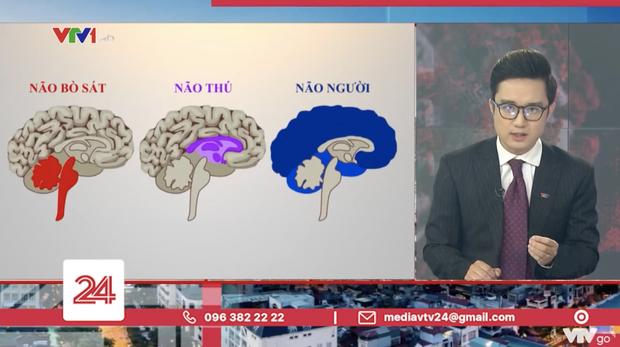 Dân mạng tranh cãi về bản tin ví von não người - não thú của VTV: Đúng tinh thần nhưng sai cách thể hiện - ảnh 1