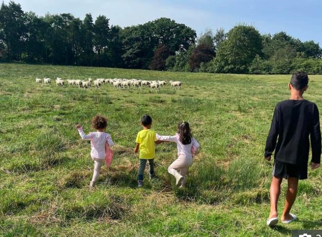 Loài động vật hiền lành nhưng lại khiến Ronaldo và gia đình rời khỏi biệt thự gần 200 tỷ đồng chỉ sau 2 tuần - Ảnh 1.