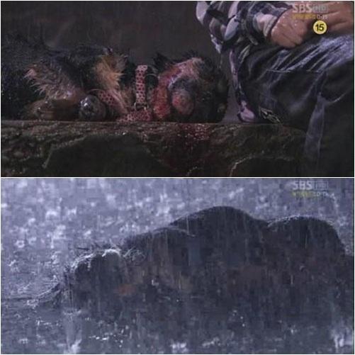 4 phim Hàn bị chỉ trích vì ngược đãi động vật: Căng nhất là màn chọi chó ở bom tấn của Lee Jun Ki - ảnh 3