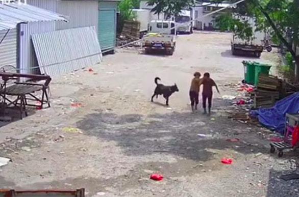 Bị chó dữ lao vào tấn công giữa đường, cụ bà tử vong thương tâm, hành động của người tài xế gần đó gây phẫn nộ tột độ - ảnh 1