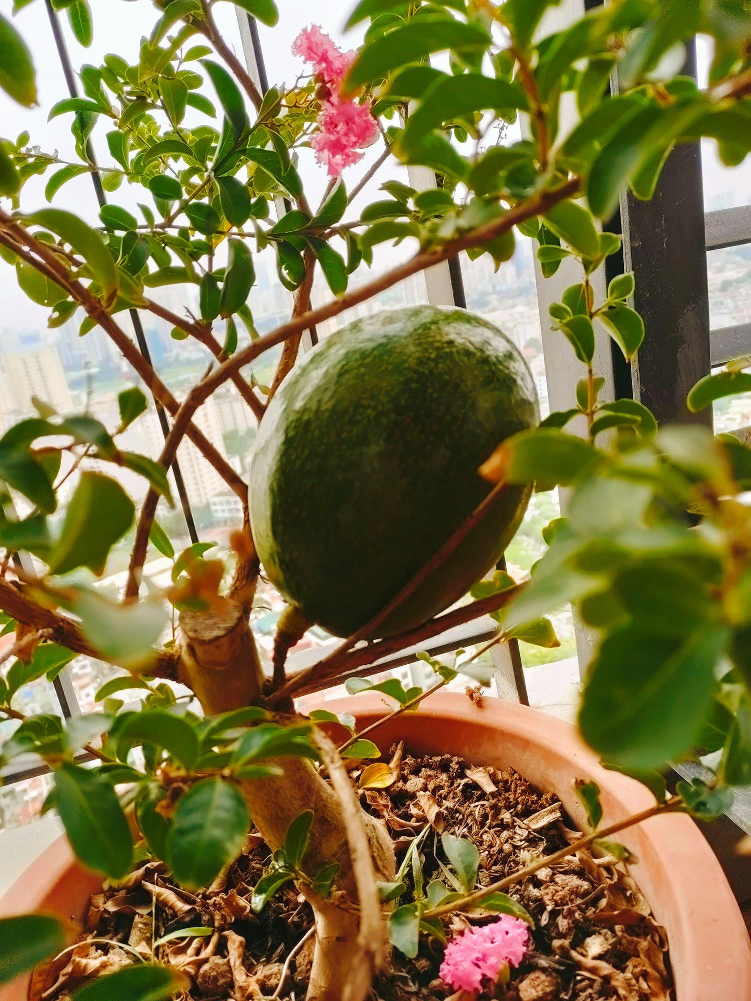 Khoe vườn cây trái trĩu quả trồng được trên chung cư, cô gái khiến dân mạng cười sang chấn tâm lý vì một lý do - Ảnh 4.