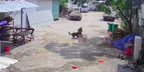 Bị chó dữ lao vào tấn công giữa đường, cụ bà tử vong thương tâm, hành động của người tài xế gần đó gây phẫn nộ tột độ - ảnh 2