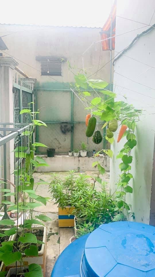 Khoe vườn cây trái trĩu quả trồng được trên chung cư, cô gái khiến dân mạng cười sang chấn tâm lý vì một lý do - Ảnh 8.
