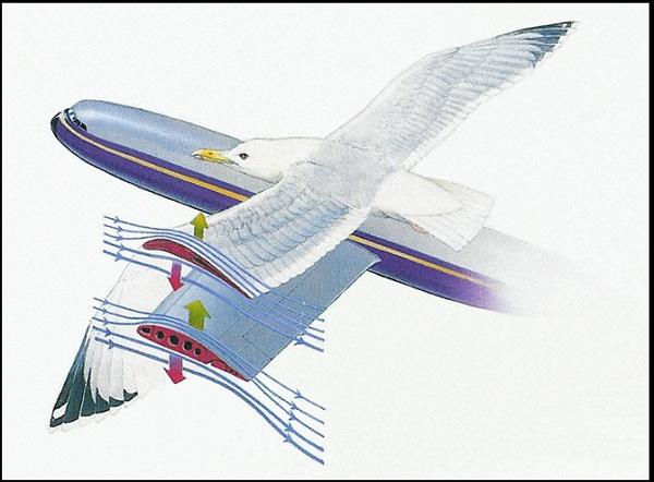 """Khám phá """"ma thuật"""" từ hiệu ứng Bernoulli"""