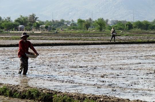 Mưa cũng đã làm giảm đáng kể không khí nóng bức đến 38-40 độ C mà người dân Ninh Thuận phải oằn mình chịu đựng trong nhiều tháng qua.
