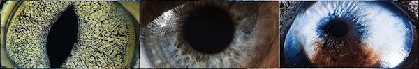 """Xem khả năng """"siêu nhân"""" của đôi mắt con người 2"""