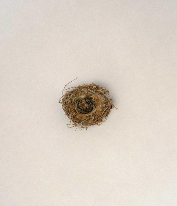 Tổ chim - kỳ quan kiến trúc của thế giới tự nhiên 3