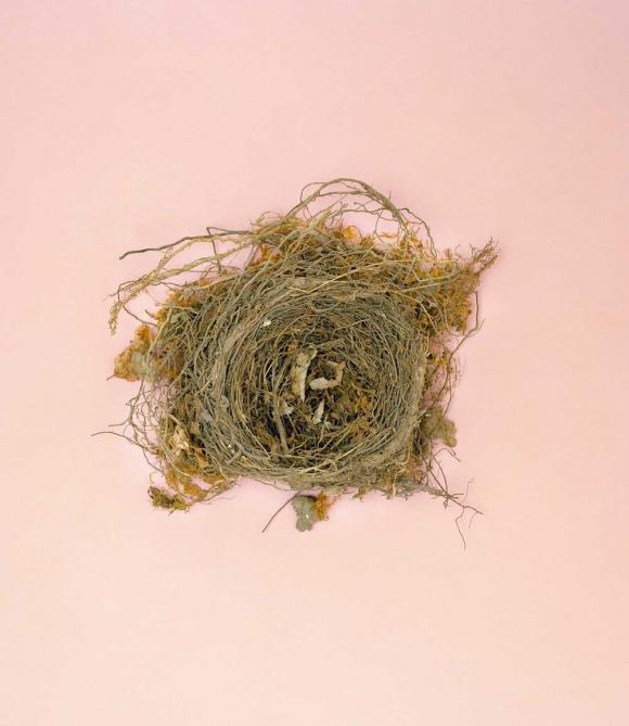 Tổ chim - kỳ quan kiến trúc của thế giới tự nhiên 4