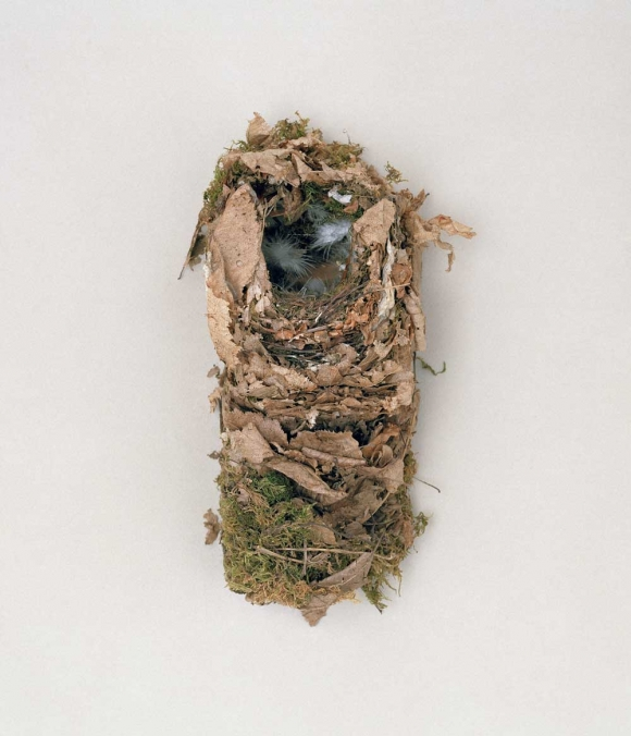 Tổ chim - kỳ quan kiến trúc của thế giới tự nhiên 5