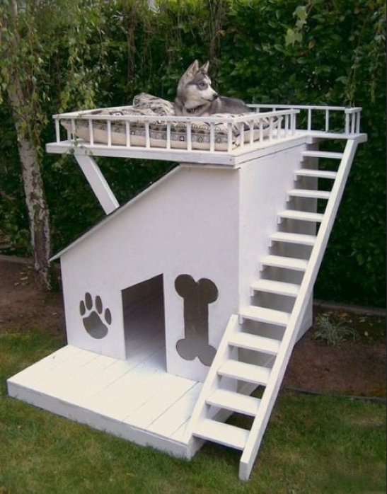 """Những ngôi nhà """"độc nhất quả đất"""" dành cho cún cưng 7"""