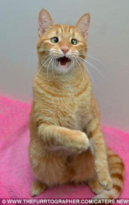 Chú mèo mắt lác bỗng trở thành ngôi sao nhờ vẻ ngoài đáng yêu 4