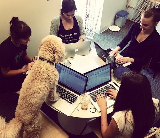 15 chú chó làm việc chăm chỉ chẳng kém gì con người - Ảnh 21.