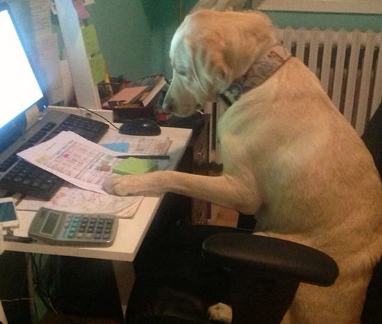 15 chú chó làm việc chăm chỉ chẳng kém gì con người - Ảnh 23.
