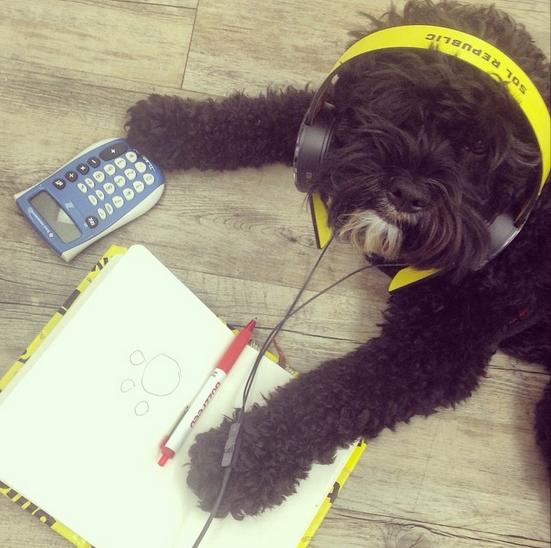 15 chú chó làm việc chăm chỉ chẳng kém gì con người - Ảnh 25.