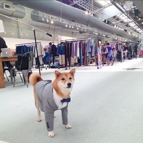 15 chú chó làm việc chăm chỉ chẳng kém gì con người - Ảnh 3.