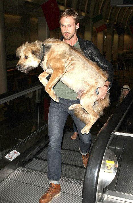Những thú cưng dễ thương của sao Hollywood 5