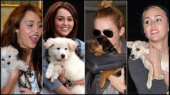 Những thú cưng dễ thương của sao Hollywood 7