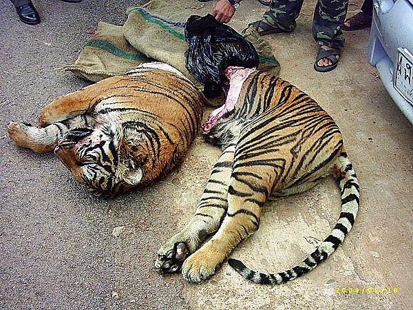 """Thực trạng săn bắt động vật quý hiếm """"gây kinh hãi"""" trên thế giới 7"""