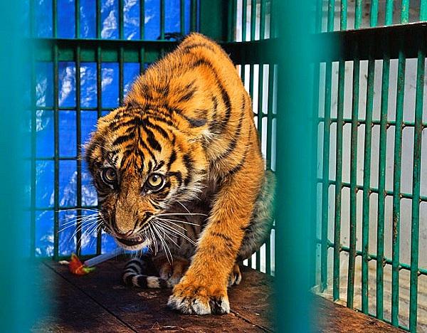 """Thực trạng săn bắt động vật quý hiếm """"gây kinh hãi"""" trên thế giới 9"""