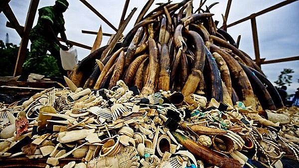 """Thực trạng săn bắt động vật quý hiếm """"gây kinh hãi"""" trên thế giới 13"""