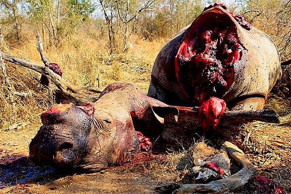 """Thực trạng săn bắt động vật quý hiếm """"gây kinh hãi"""" trên thế giới 2"""
