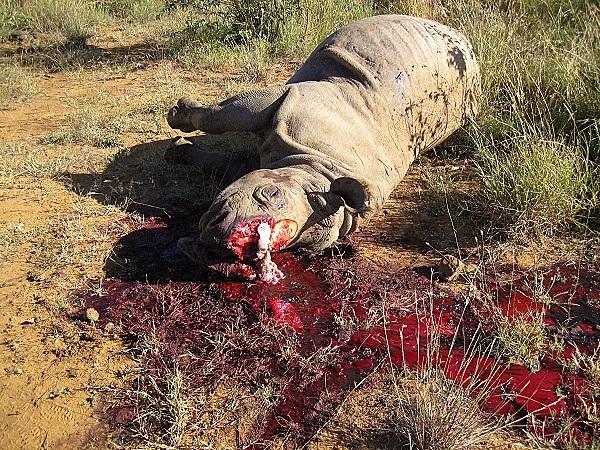 """Thực trạng săn bắt động vật quý hiếm """"gây kinh hãi"""" trên thế giới 3"""