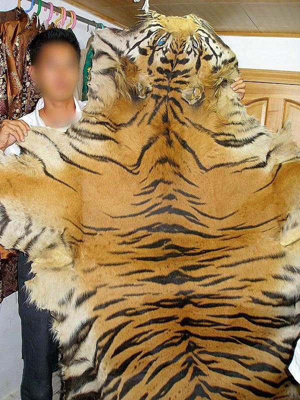 """Thực trạng săn bắt động vật quý hiếm """"gây kinh hãi"""" trên thế giới 6"""