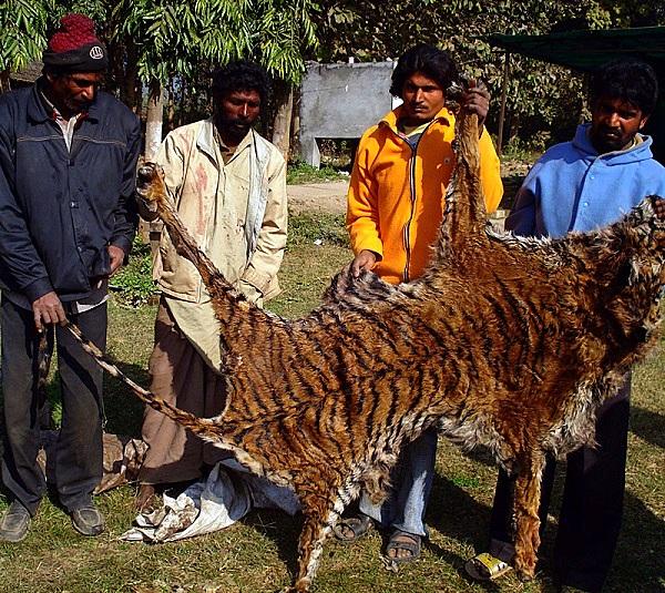 """Thực trạng săn bắt động vật quý hiếm """"gây kinh hãi"""" trên thế giới 8"""