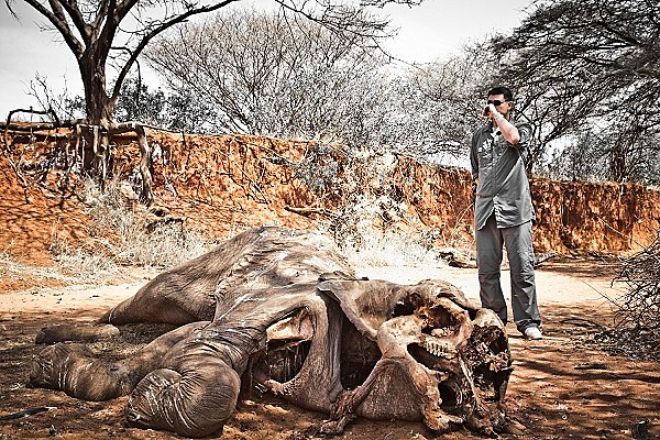 """Thực trạng săn bắt động vật quý hiếm """"gây kinh hãi"""" trên thế giới 11"""