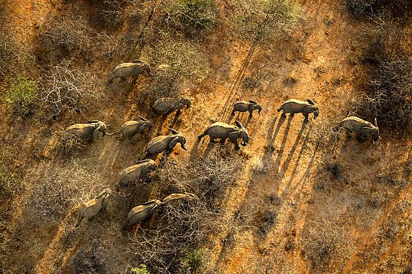 """Đến Kenya xem người dân bảo vệ động vật như """"báu vật"""" 1"""