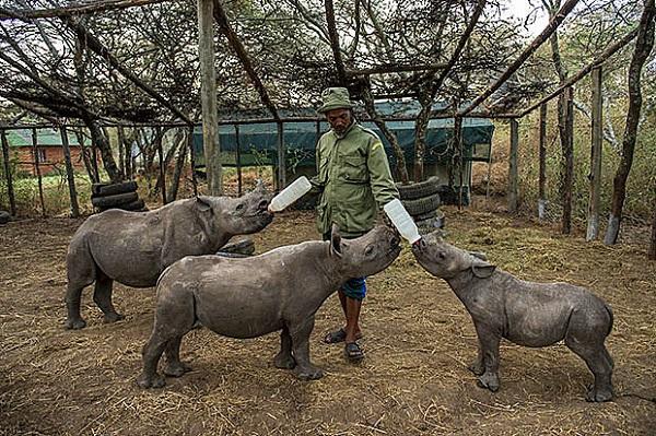 """Đến Kenya xem người dân bảo vệ động vật như """"báu vật"""" 6"""