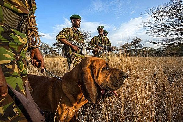 """Đến Kenya xem người dân bảo vệ động vật như """"báu vật"""" 7"""