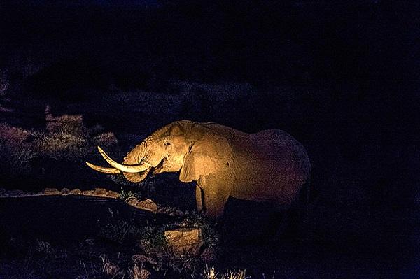 """Đến Kenya xem người dân bảo vệ động vật như """"báu vật"""" 10"""
