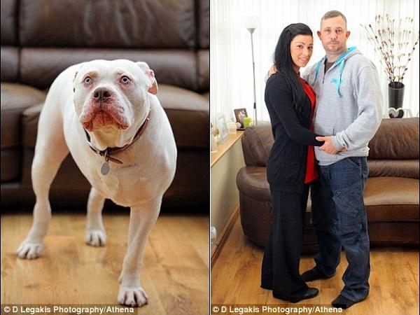Hoãn tuần trăng mật 12.000 đôla để chữa bệnh cho cún cưng 2