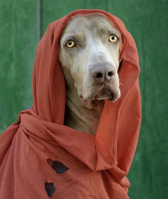 Chú chó tạo dáng chụp ảnh trên Instagram có 3,5 triệu fan 26