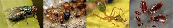 5 loài sâu đáng sợ nhất hành tinh 15